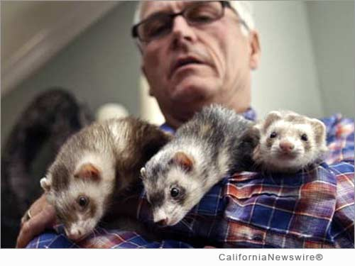 California Ferret Enthusiasts