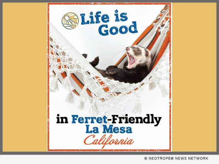 LA MESA CA Ferret Friendly